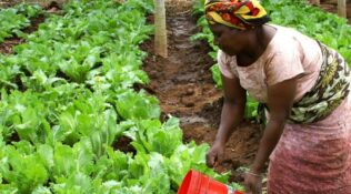 Food is a geopolitical matter and Africa has the future